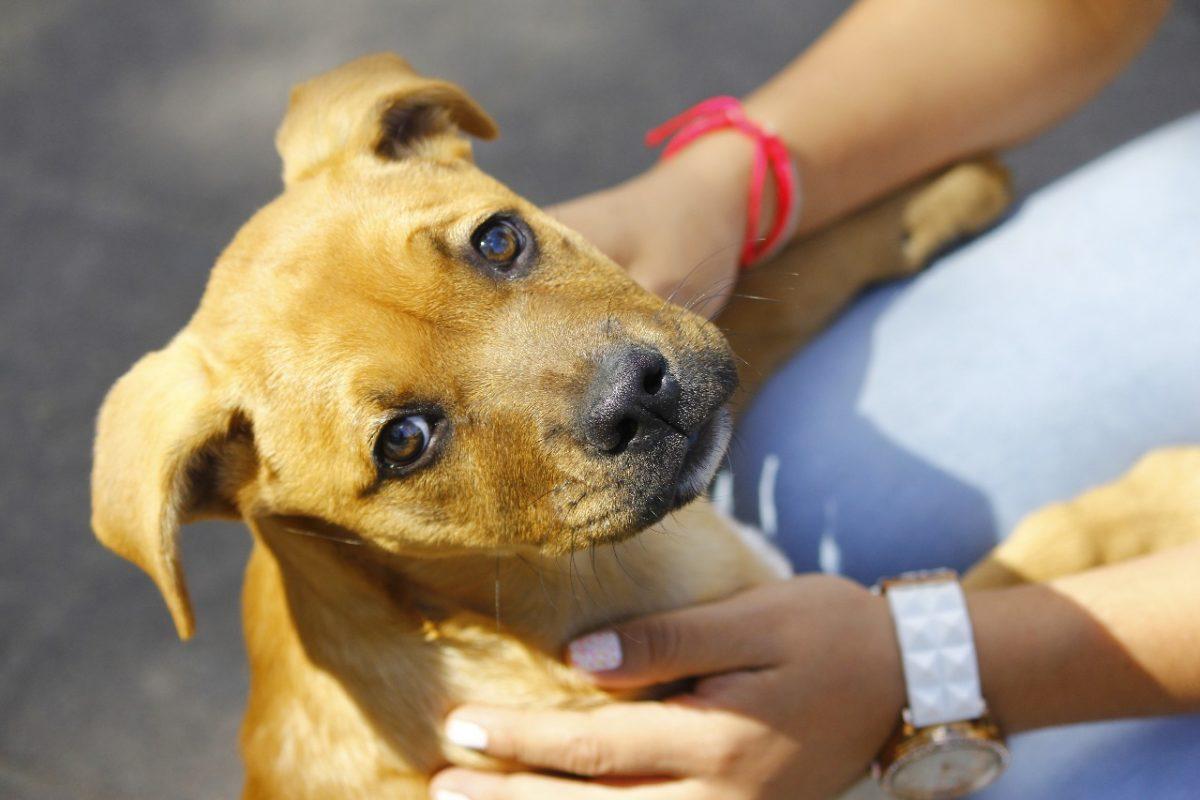 ¿Por qué debes vacunar a tu mascota contra la rabia?
