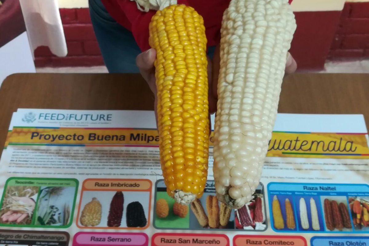 Entregarán semillas mejoradas a agricultores