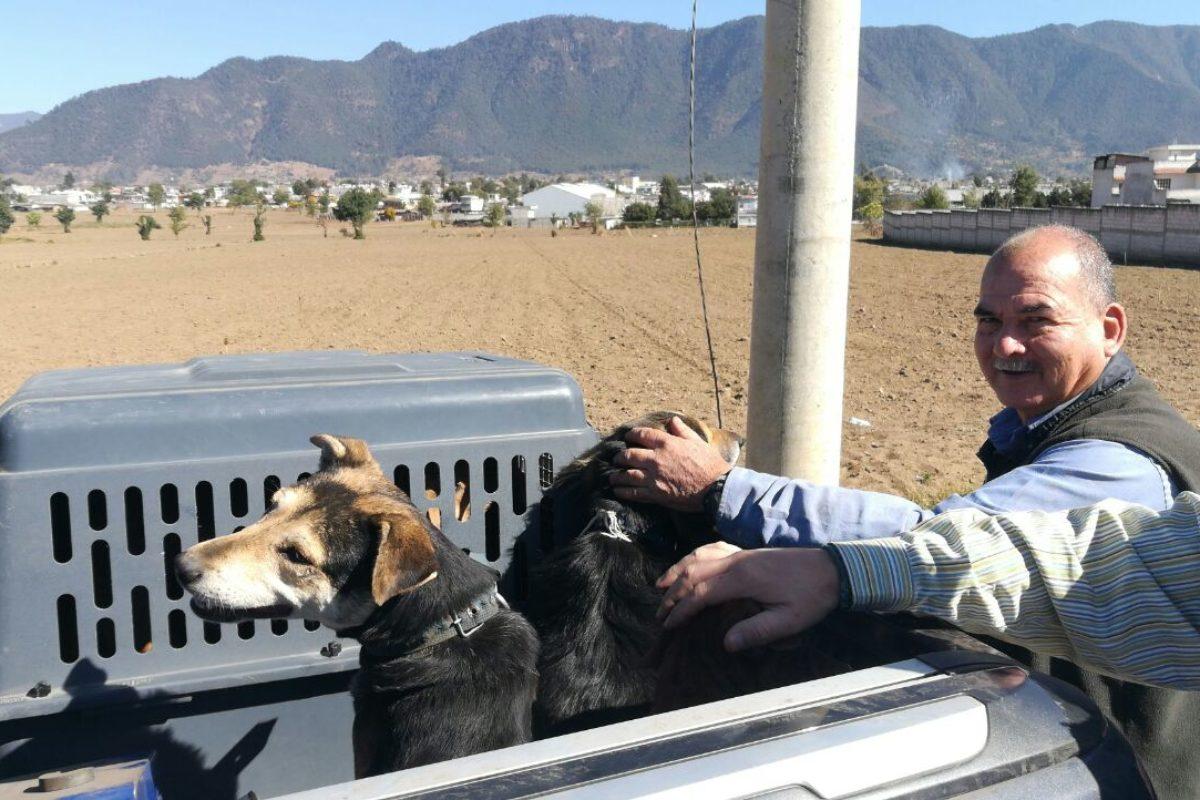 Rescatan a 10 perros en La Esperanza