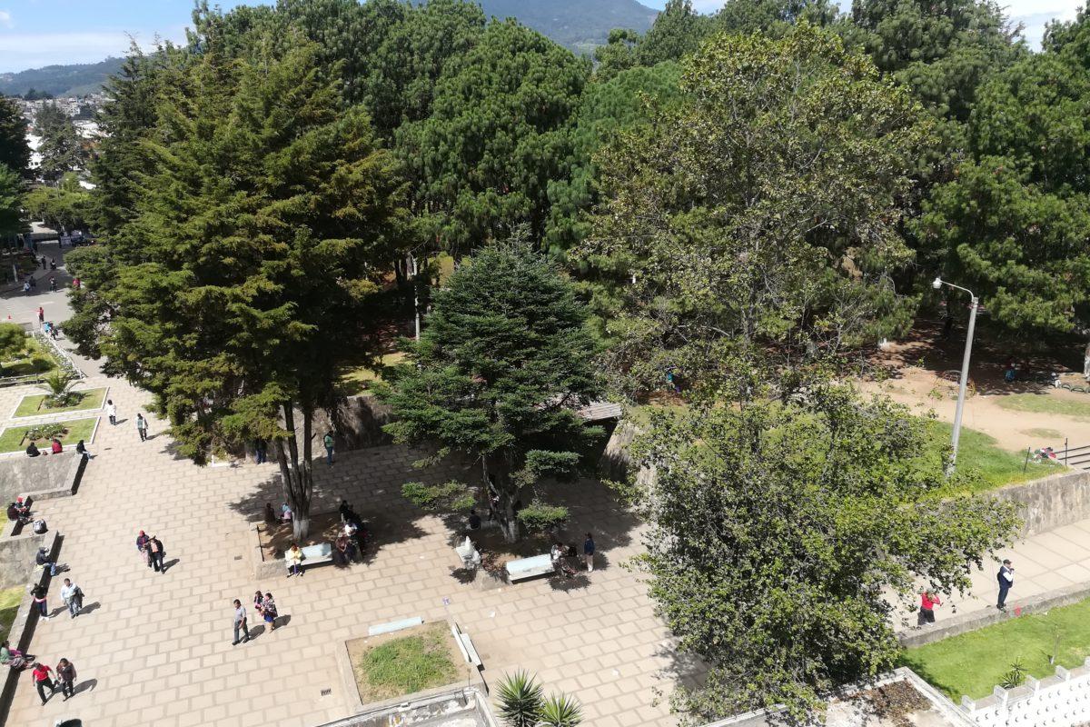 Talarán 13 árboles en el HRO