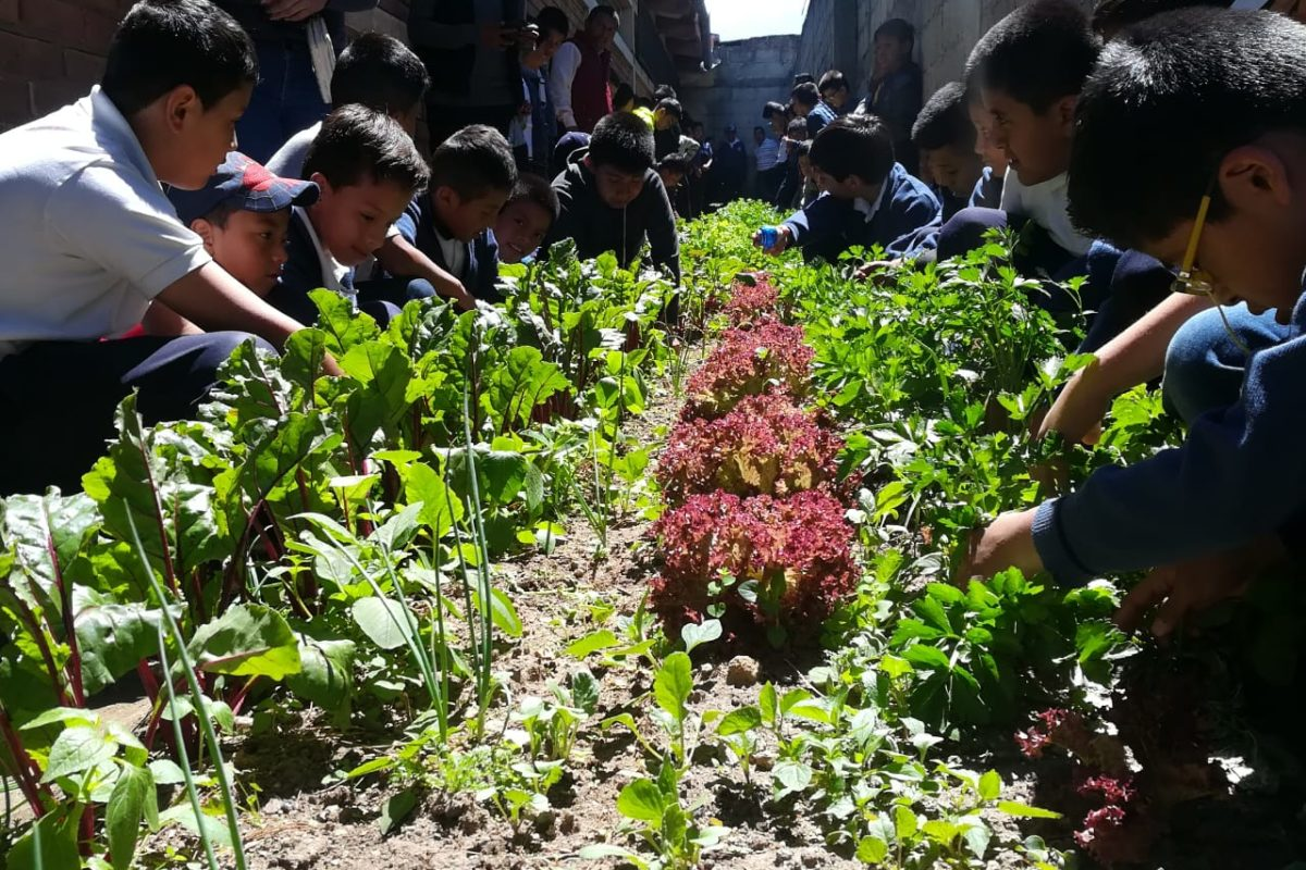Huertos escolares, una forma diferente de aprender