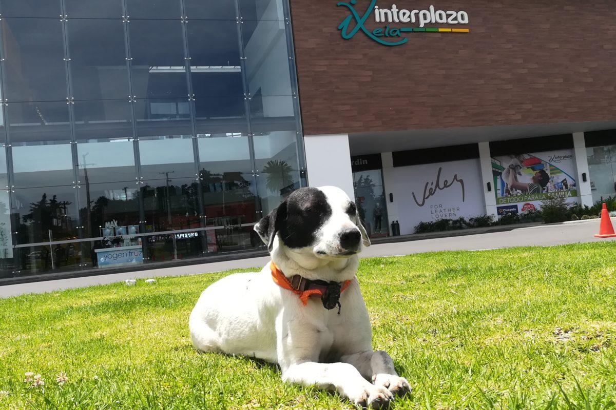 Manchitas: la perrita de la calle que halló su hogar en un centro comercial
