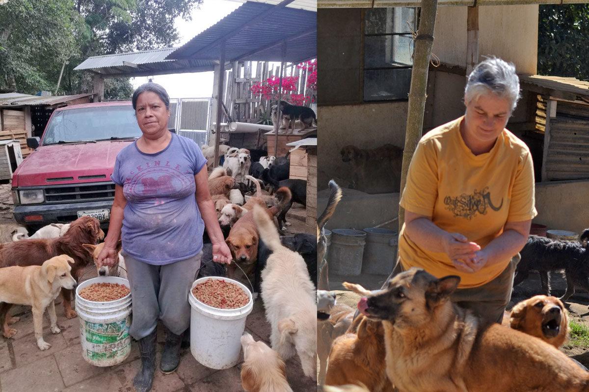 Conoce a las dos mujeres que dan abrigo y alimento a 700 perros