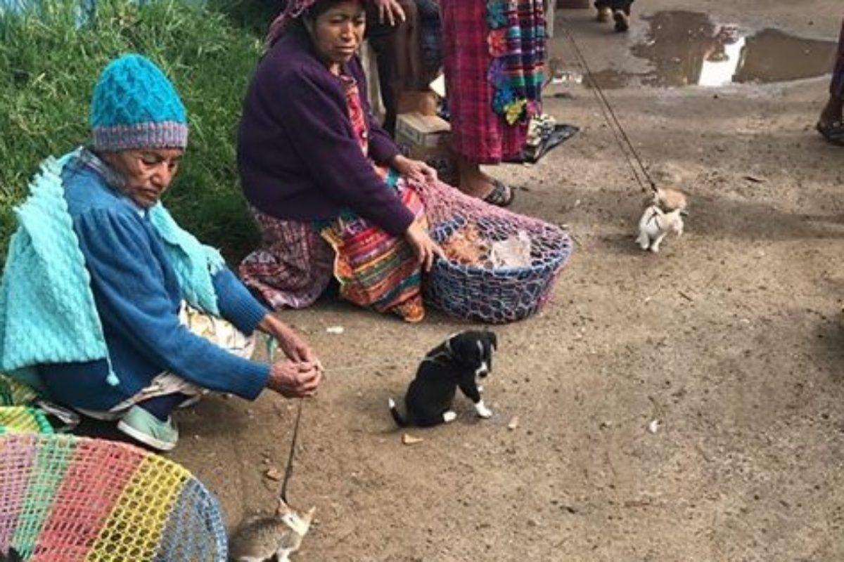 Notifican a vendedores que está prohibida la venta de perros en el mercado de Salcajá