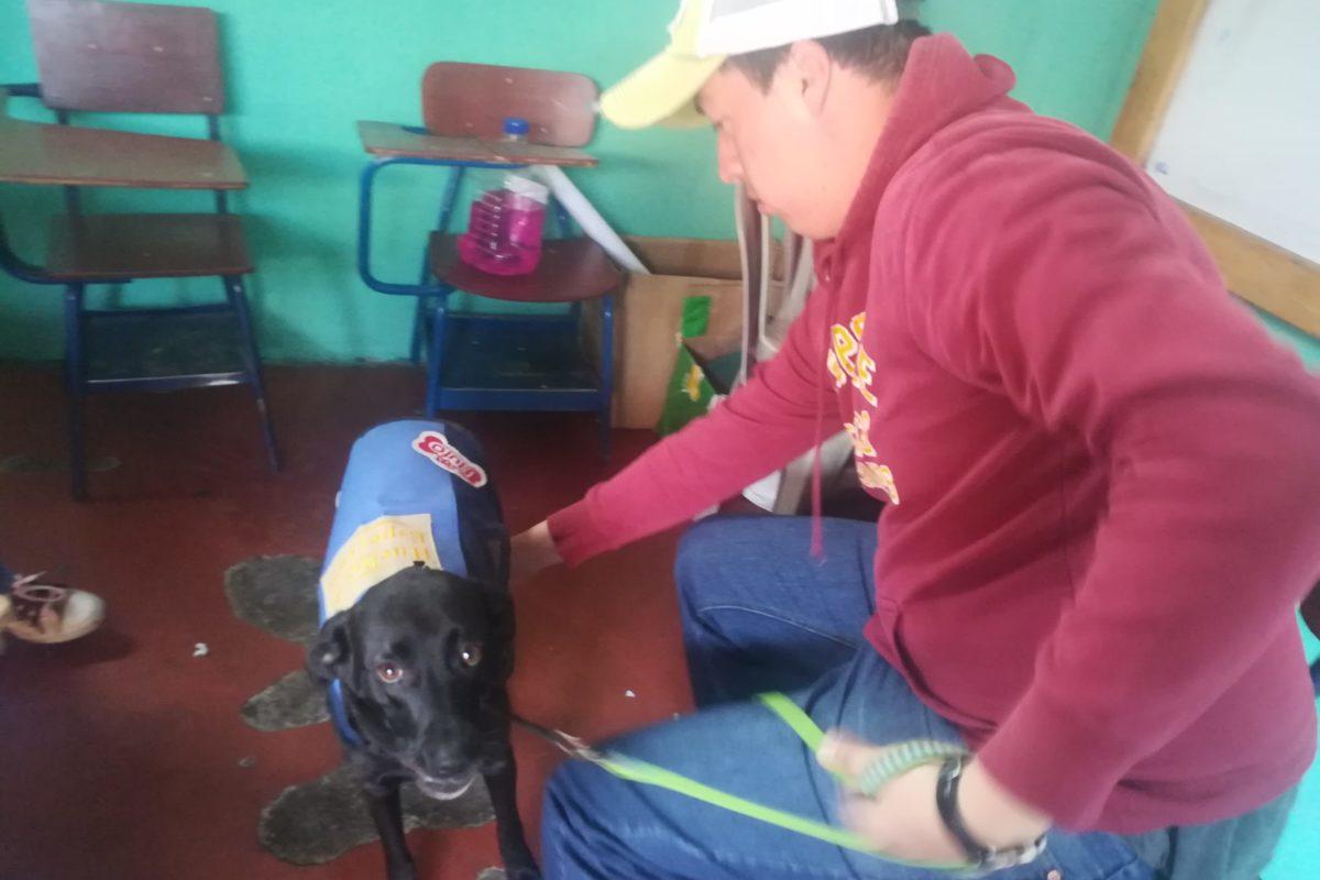 Perros dan terapia a jóvenes con discapacidad