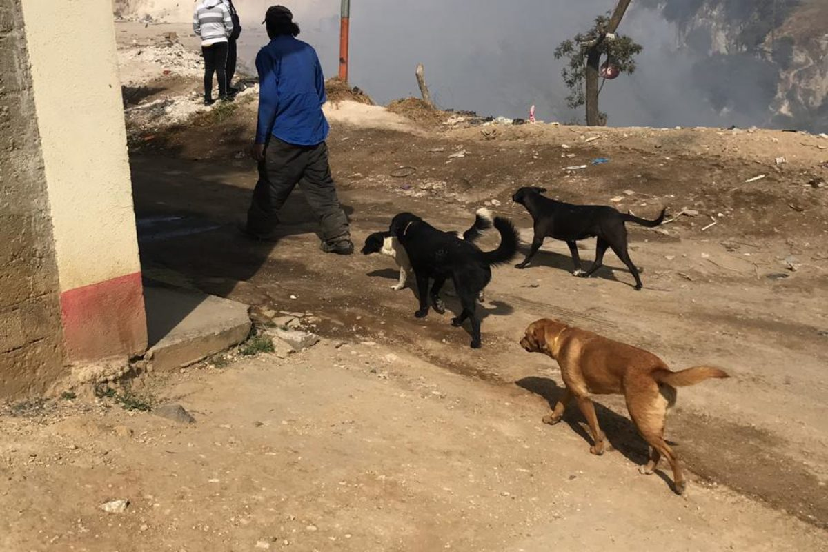 Salvan a perros por incendio en vertedero