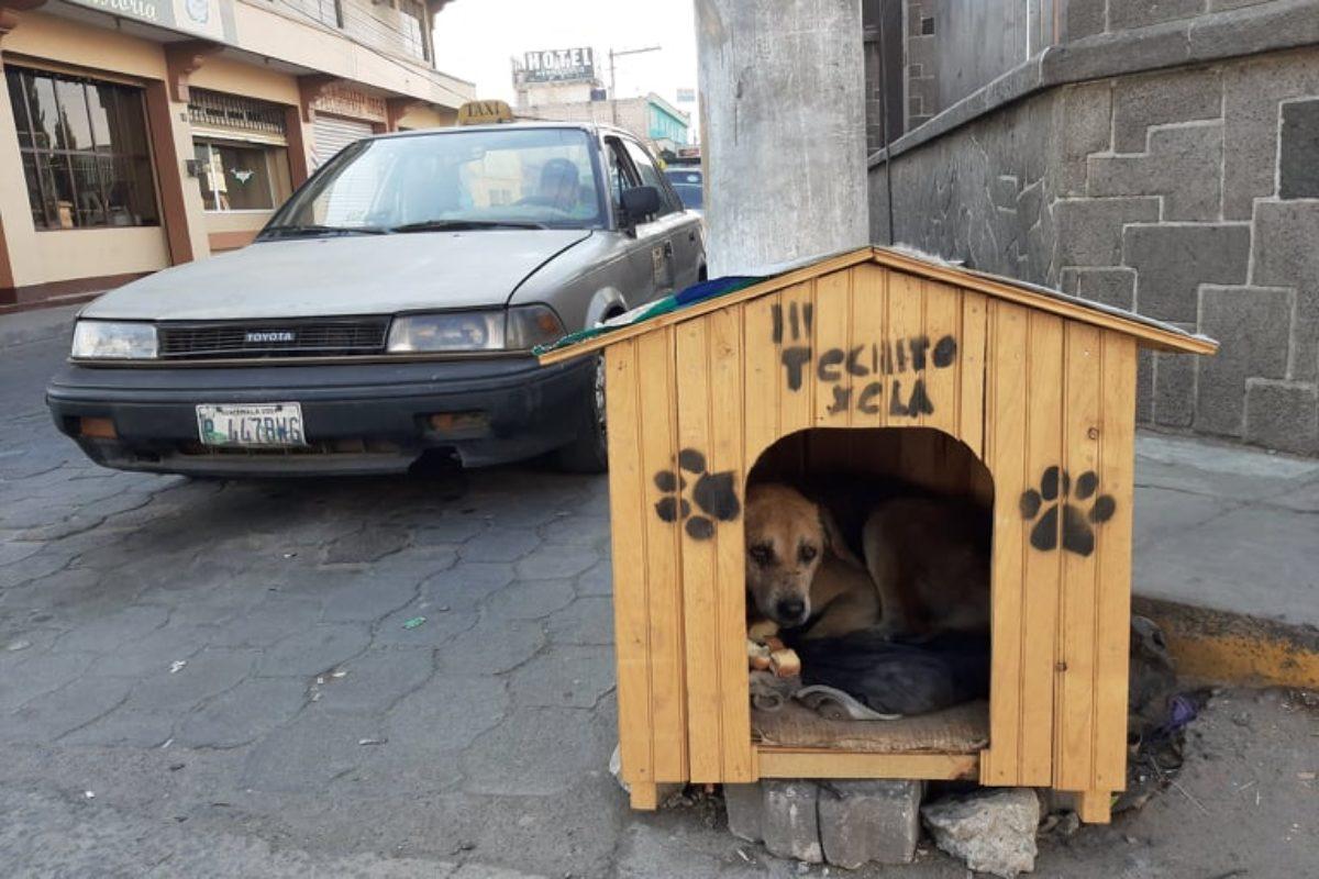 """Taxistas le dan hogar al perro """"Trono"""""""