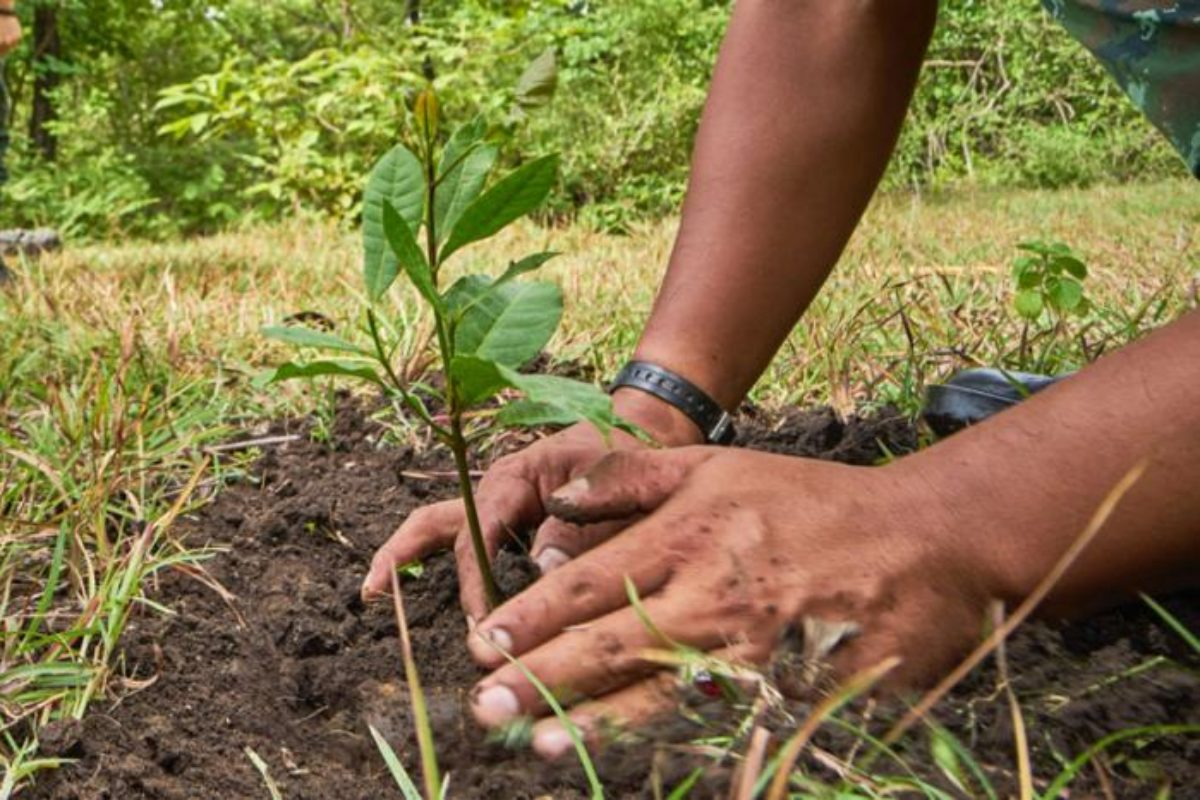 Convenio: en Salcajá por cada arbolito talado se deben sembrar diez