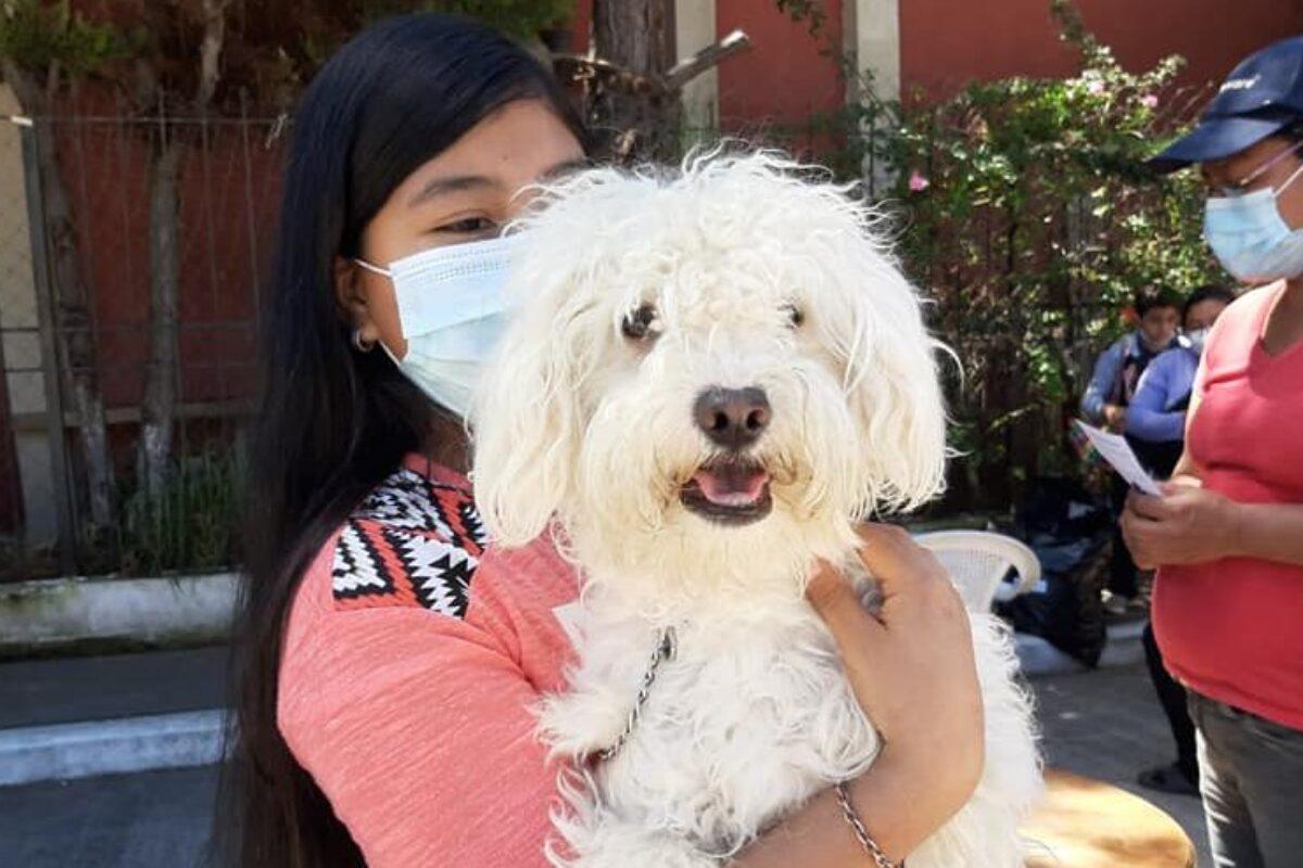 Calendario de vacunación canina en Xela