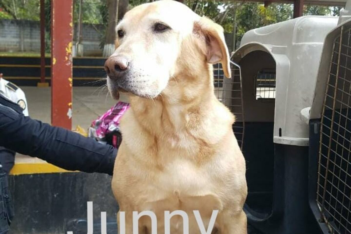 MISIÓN CUMPLIDA: Seis canes se retiran de la PNC