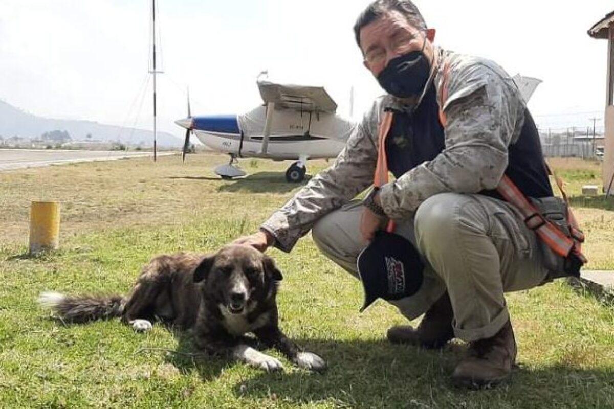 """""""Seneca"""": la perra adoptada por el aeropuerto Los Altos"""