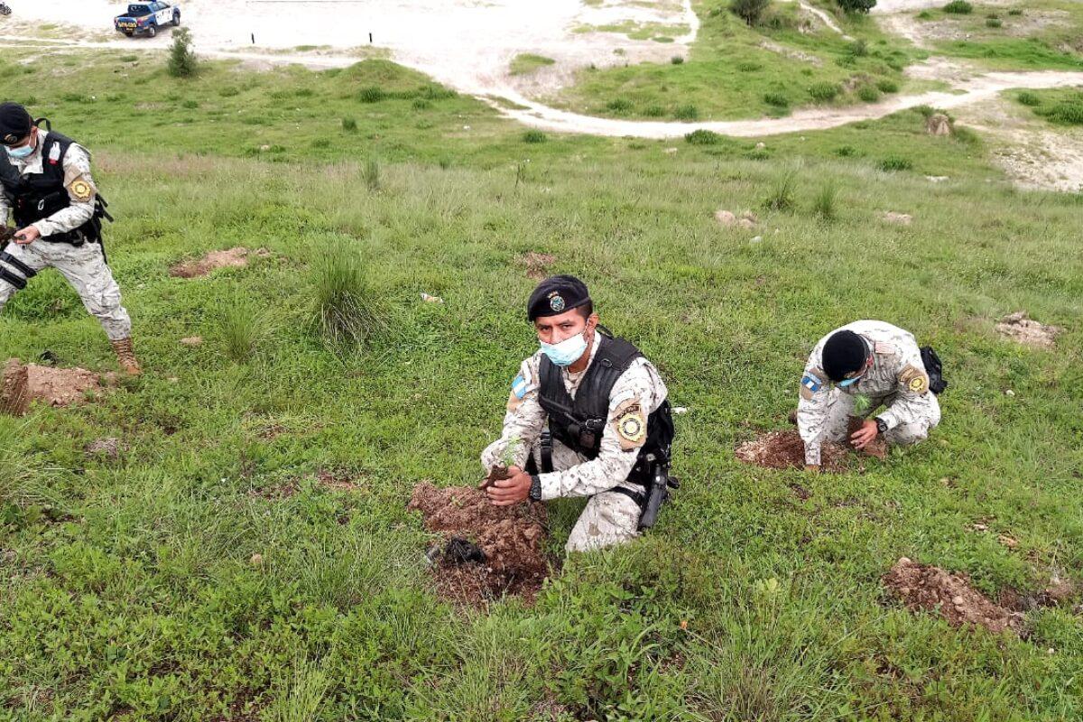 Policías, vecinos y estudiantes siembran 800 árboles en tres municipios de Quetzaltenango
