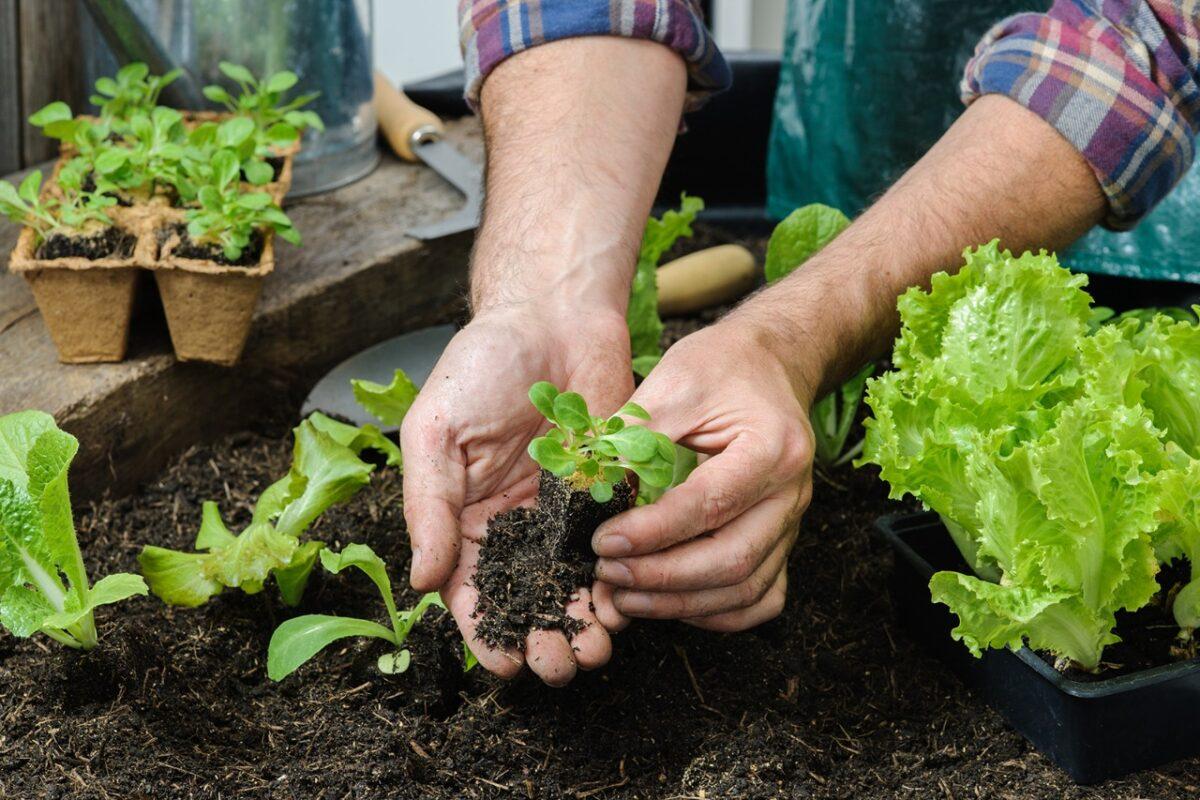 Los cinco vegetales más fáciles de cultivar en casa