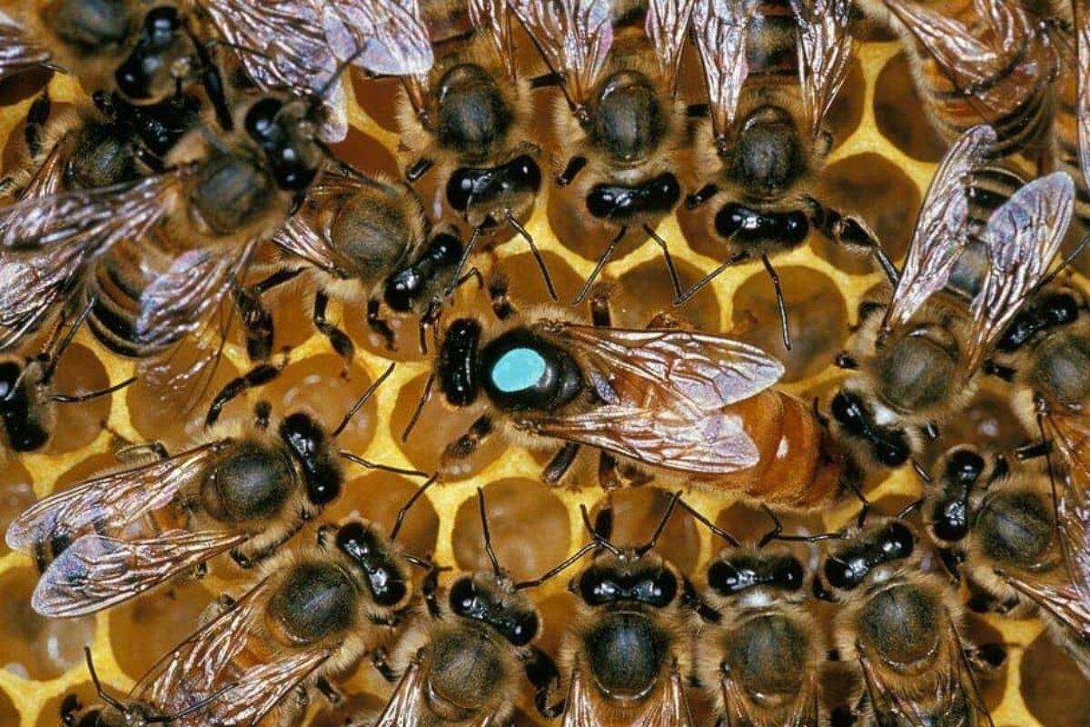La mejor miel se obtiene alborotando el avispero