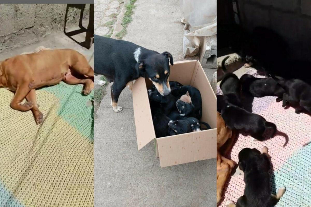 ADOPTA | Dieciséis cachorros necesitan de tu ayuda