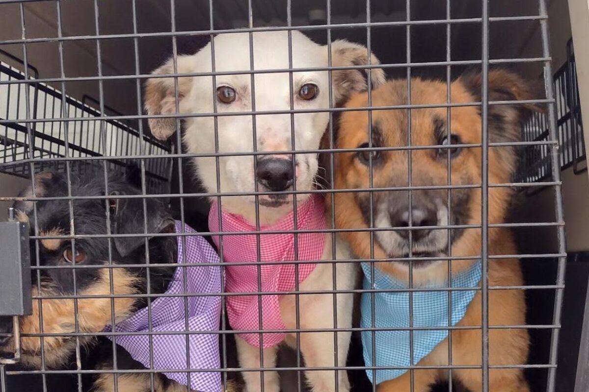 Cómo puedes adoptar a uno de los perritos rescatados en La Esperanza