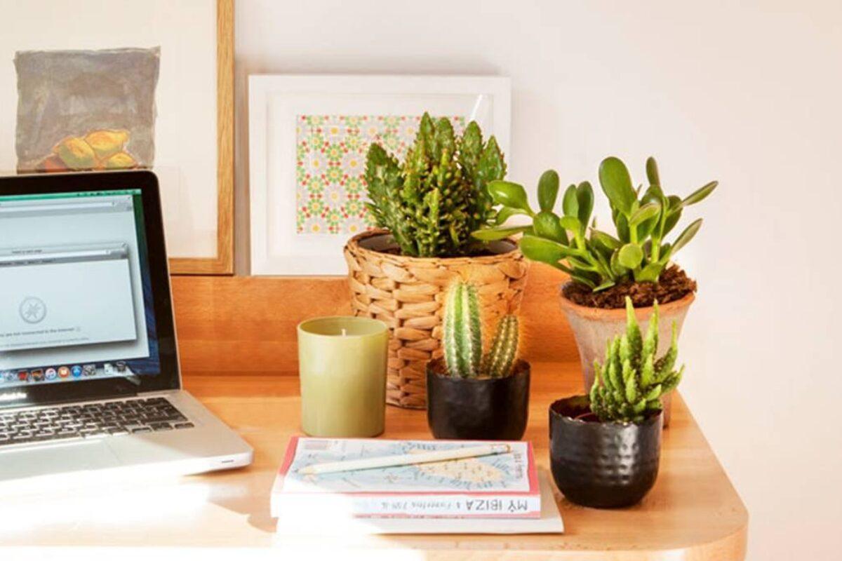 Plantas en el espacio ayudan a tu rendimiento laboral